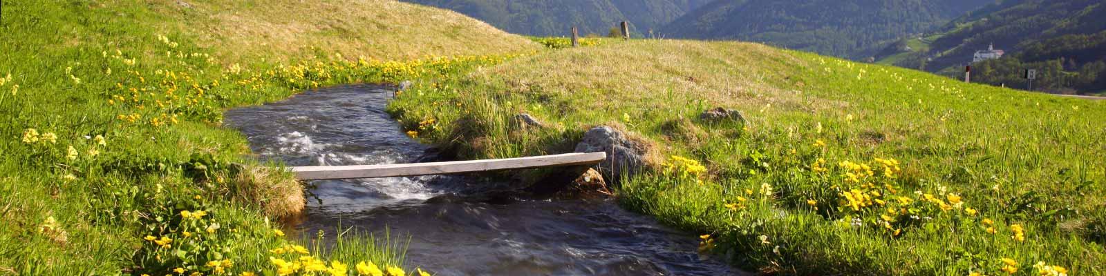 Psychotherapie, der Fluß des Lebens